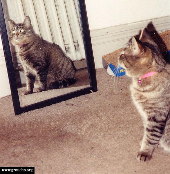 Phoebe the vain